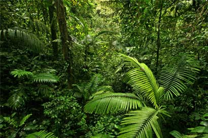 Modernización de Ley Forestal buscaría mejorar productividad de madereros