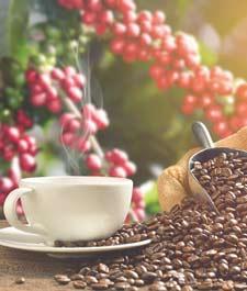 Día Internacional del Café 2017