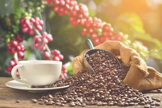 Café costarricense se distingue entre los mejores del mundo