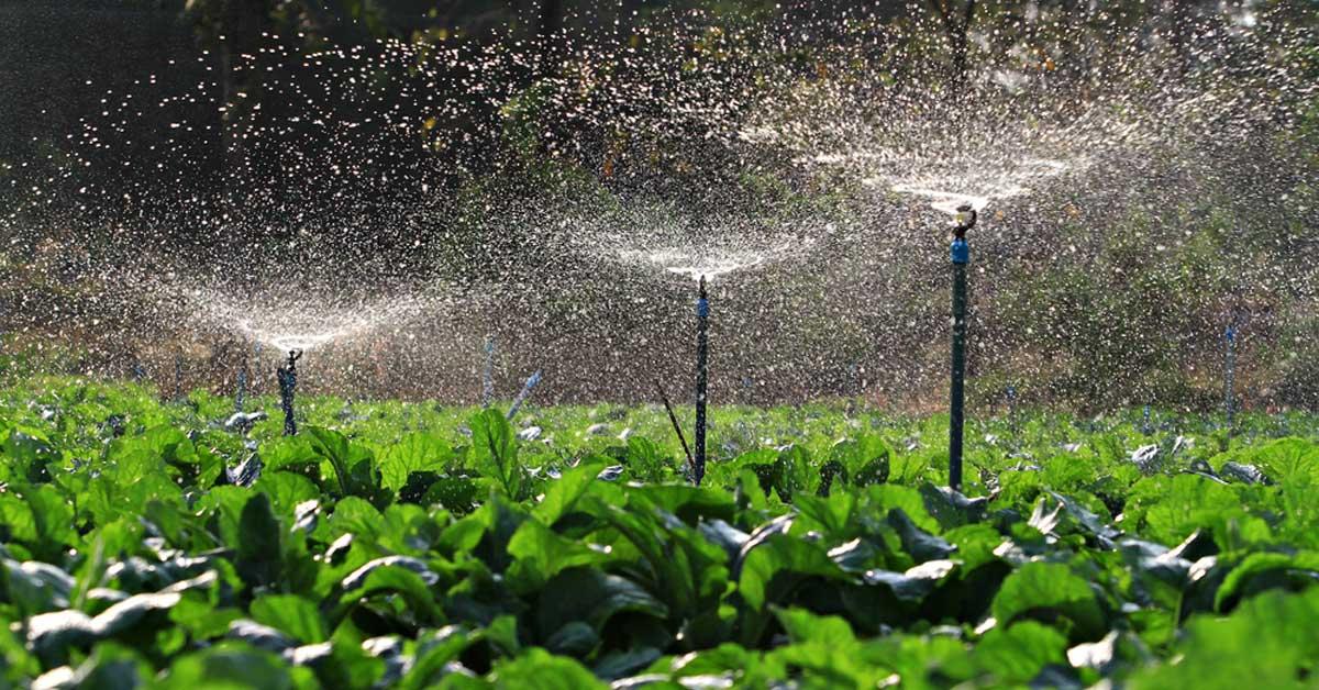Agrónomos especializados en riego y drenaje podrán colegiarse