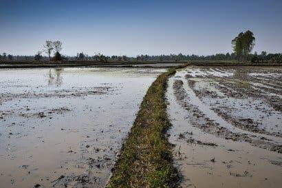 MAG contabiliza 124 mil hectáreas de cultivos dañados por Nate