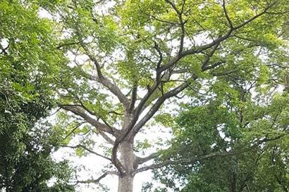 Santa Ana Country Club conectará fauna local con plan de reforestación