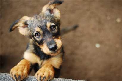 Subaru dará un día libre a los empleados que adopten una mascota