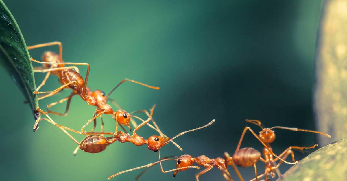 Control biológico de plagas en el país con oportunidades de crecimiento