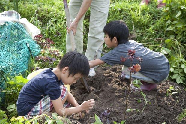 FAO advierte que el 71% del Trabajo Infantil ocurre en la agricultura