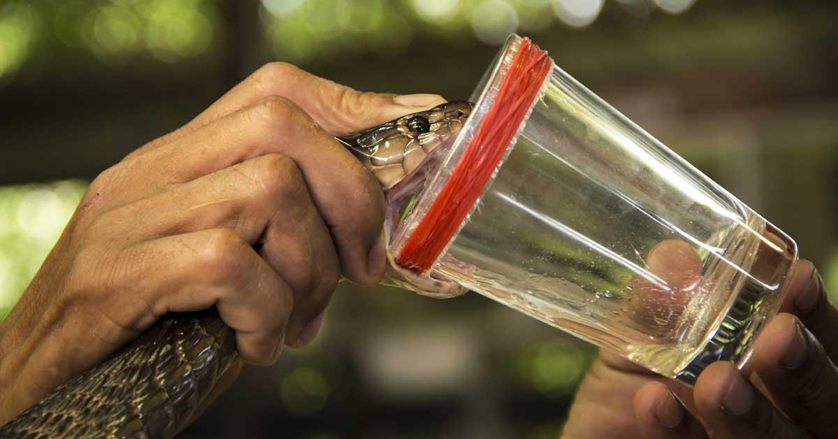 Costa Rica lidera propuesta global para combatir envenenamiento por mordeduras de serpiente