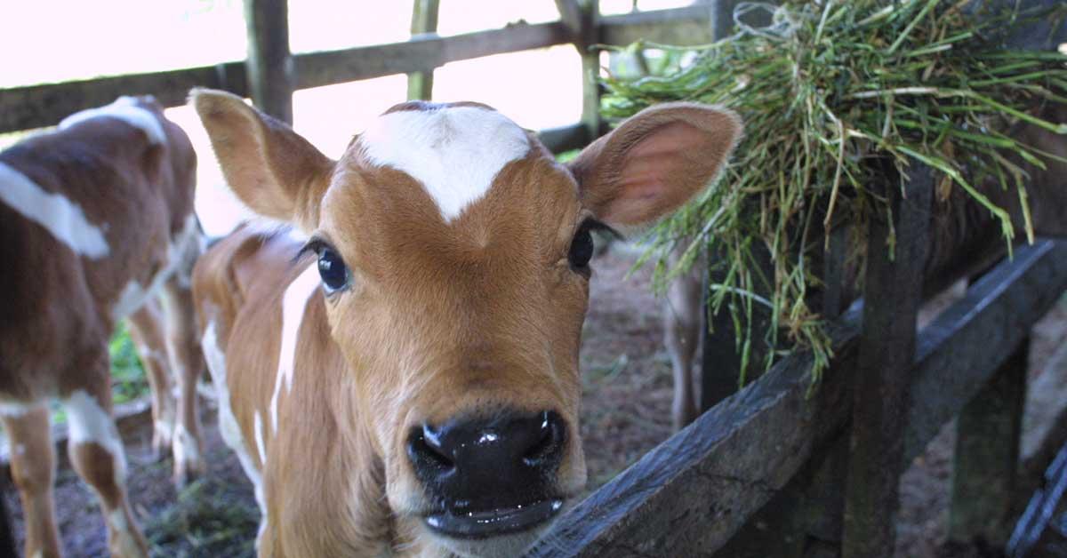 Proyecto modificaría requisitos de Senasa para pequeños productores
