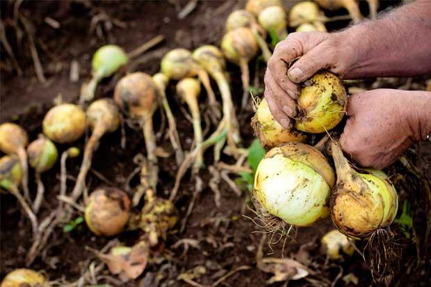Diputados dictaminan fideicomiso para apoyar a agricultores afectados por Otto