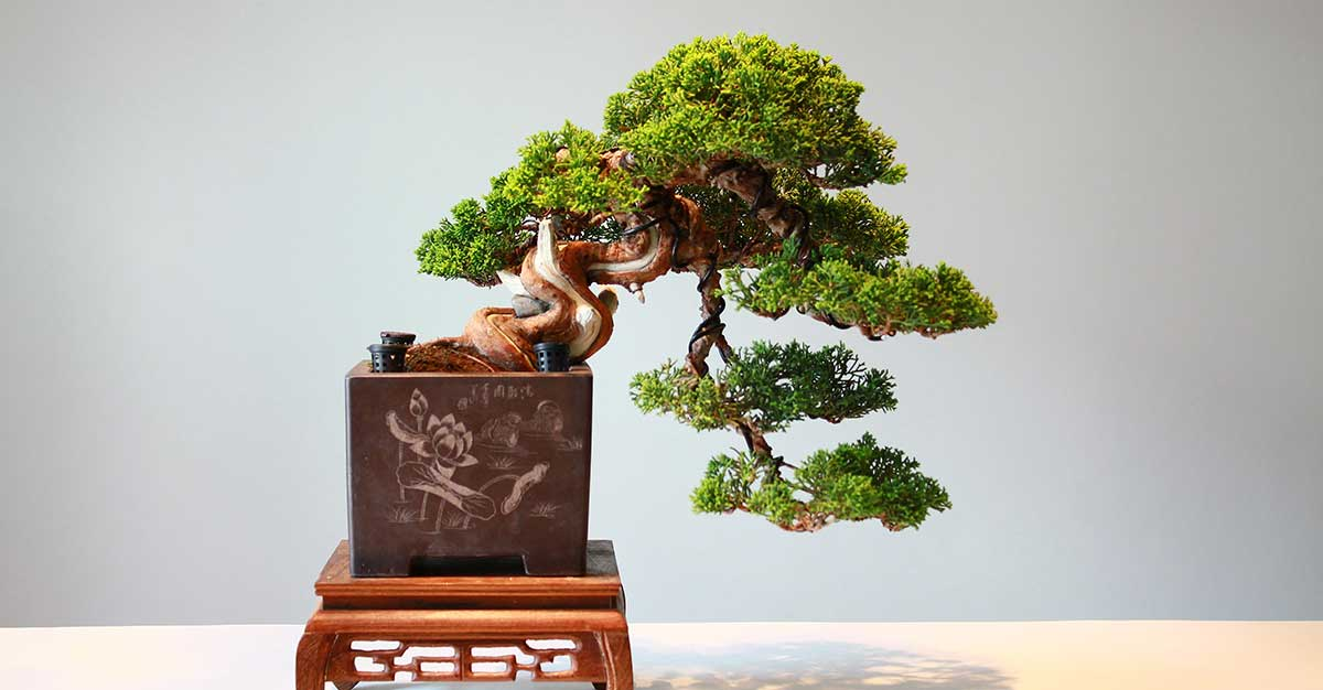 ¿Le gustan los bonsái? Esta feria en Escazú es para usted