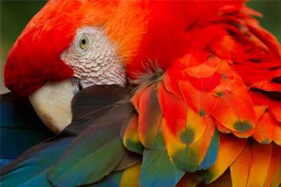 Centros de rescate ZooAve y Las Pumas reciben acreditación internacional