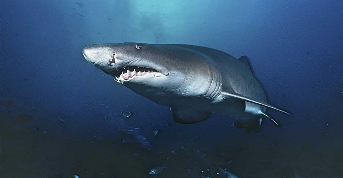 Expertos llaman a la calma por abundancia de tiburones en Isla del Coco