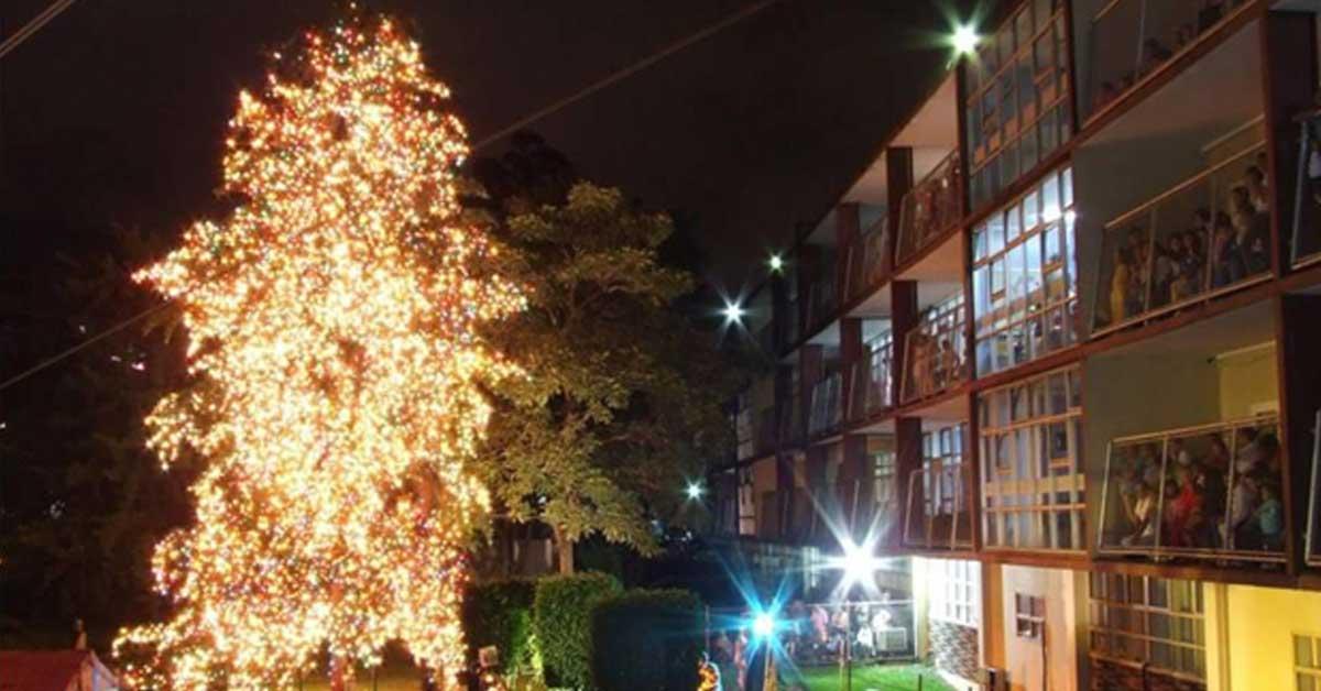 Árbol del Hospital de Niños será iluminado mañana