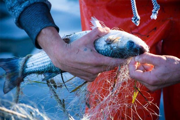 FAO respalda pesca de arrastre dando capacitaciones en el país