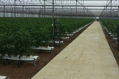 Tomatissimo obtiene certificación de buenas prácticas agrícolas