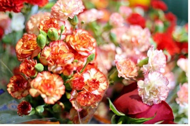 Costa Rica tendría más oportunidades de exportar plantas y flores hacia Estados Unidos