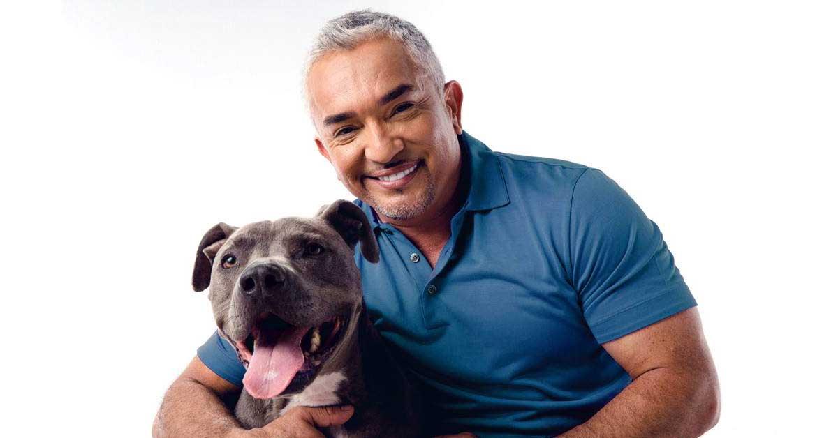 El Encantador de Perros volverá a Costa Rica
