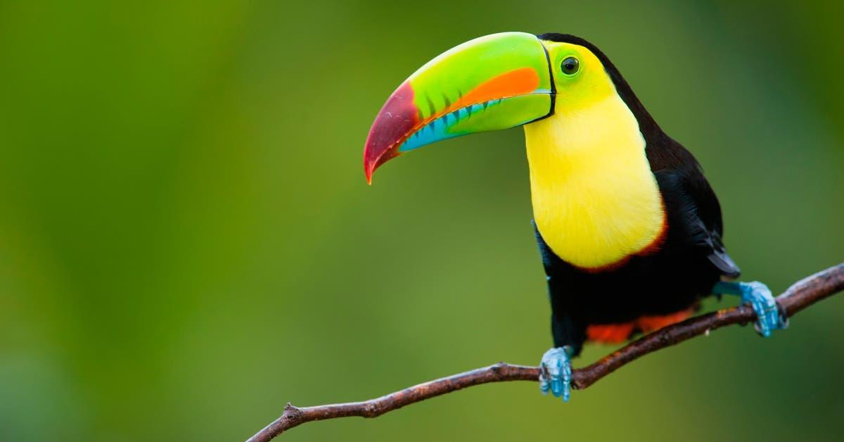 Ley de bienestar animal coloca a Costa Rica en top de destinos éticos