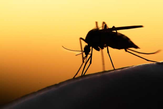 Costa Rica recibe premio por avances contra la malaria