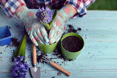 INA inaugura técnico en jardinería