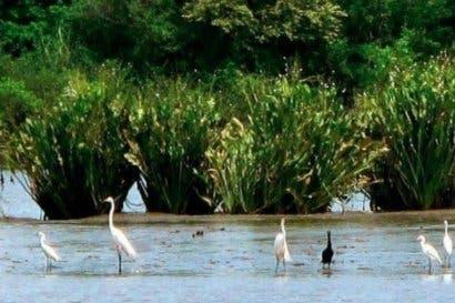 Costa Rica avanza en desarrollo sostenible gracias la conservación de humedales