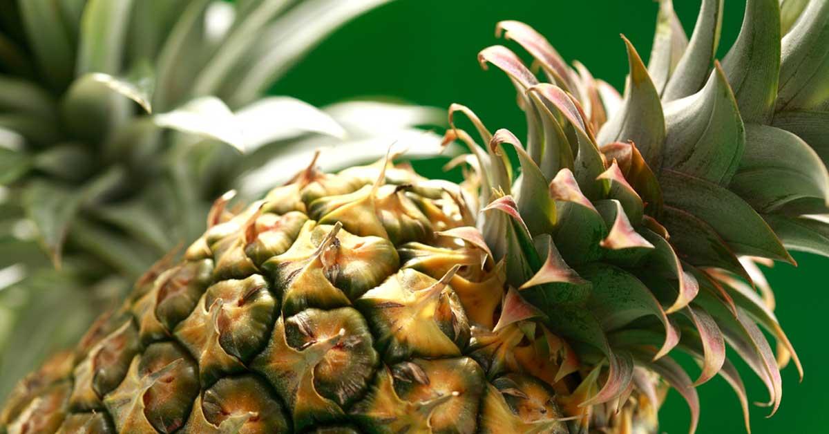 Iniciará investigación por supuesta exportación de piña orgánica falsa