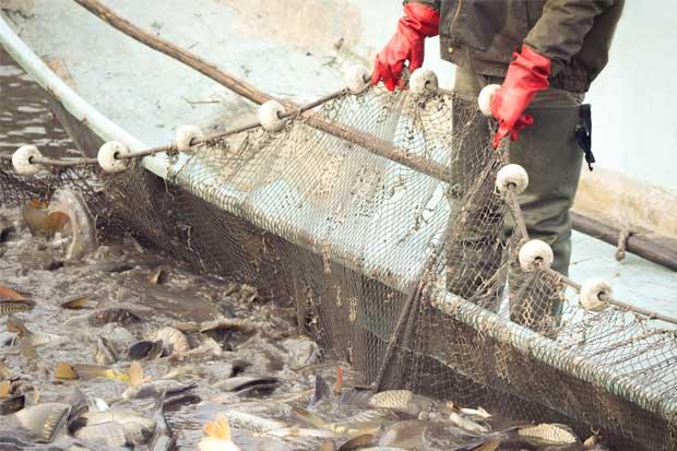 Más de 50 mil personas solicitan al próximo gobierno detener la pesca de arrastre