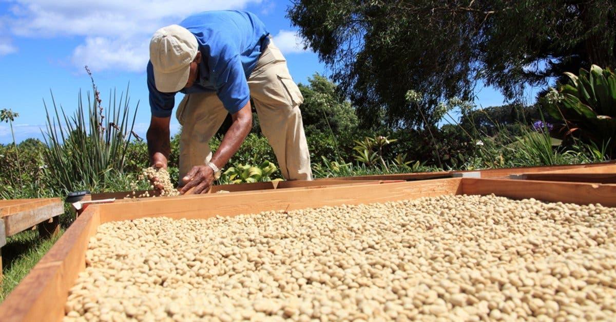 Mercado para pequeños productores creció durante 2017