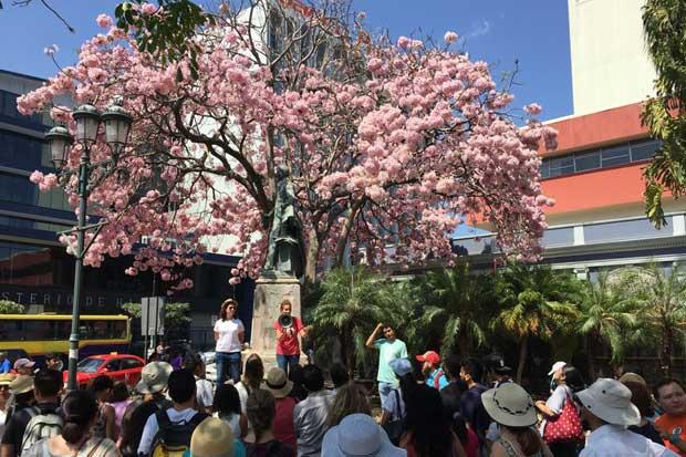 Mejores fotos de árboles floreados ganarán hasta $300