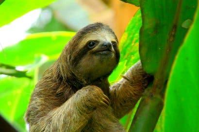 Costa Rica presentó el primer informe oficial del estado del ambiente