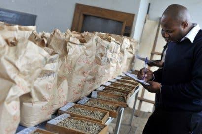 Uganda comienza su primera subasta de café y promociona calidad