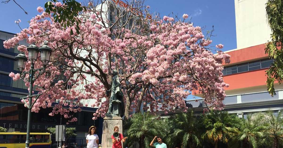 Conozca reglamento de concurso que premiará fotografías de árboles floreados