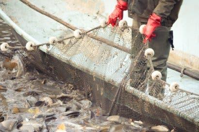 Incopesca concilia protección de especies marinas con pescadores