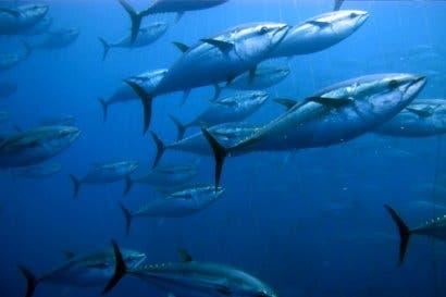 Costa Rica desarrollará proyectos de mejora de pesca de atún, pez espada y dorado