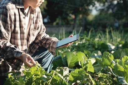 Embajada ofrece becas a Israel para capacitarse en agricultura