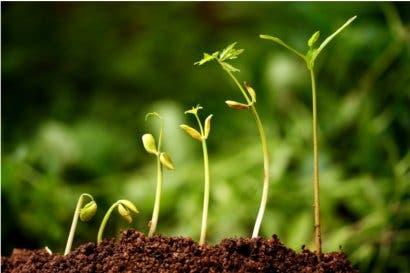 Bolsa Nacional de Valores promueve el ingreso de bonos verdes al mercado