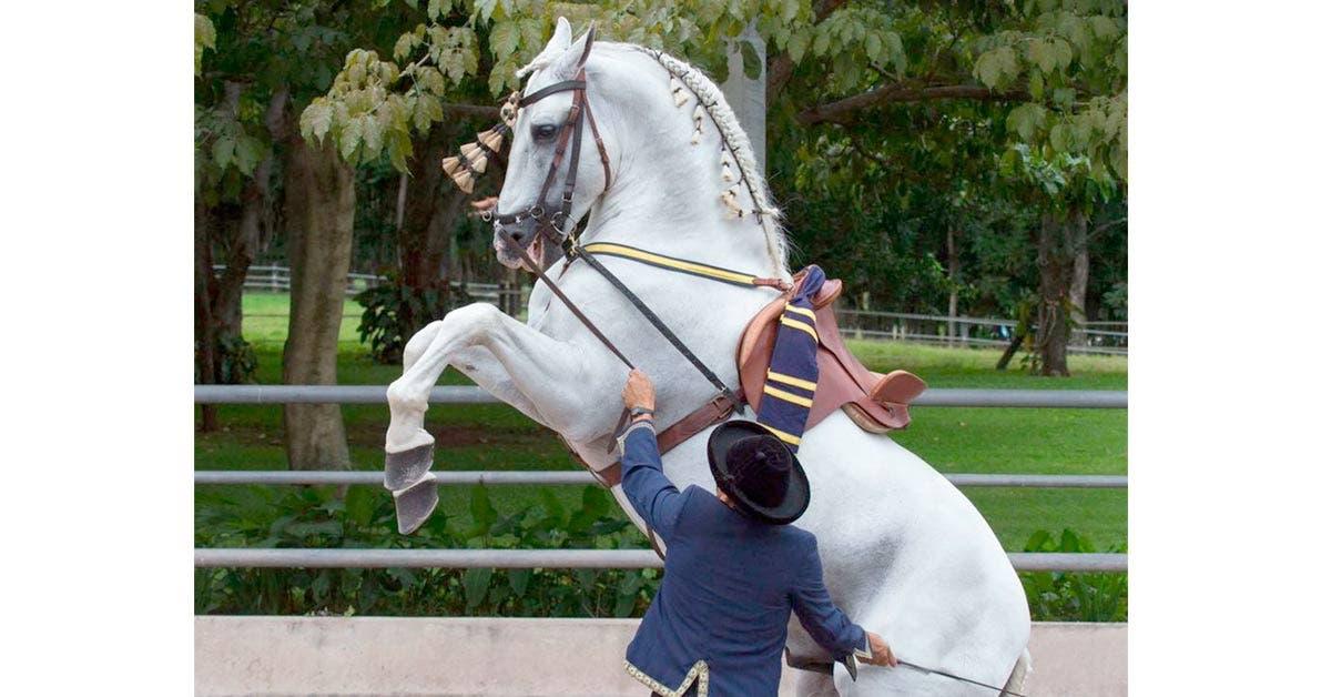 Impresionantes caballos españoles desfilarán en Pedregal