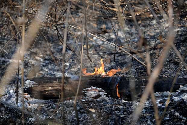 Incendios forestales han consumido 686 hectáreas de áreas protegidas
