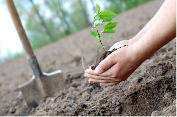 Gobierno lanza plan para desarrollo sostenible con miras al 2050