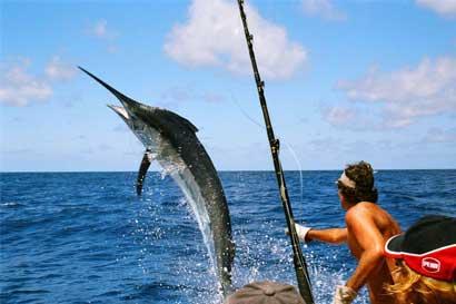 Fauna marina atrae 30 países en Mundial de pesca deportiva en Costa Rica