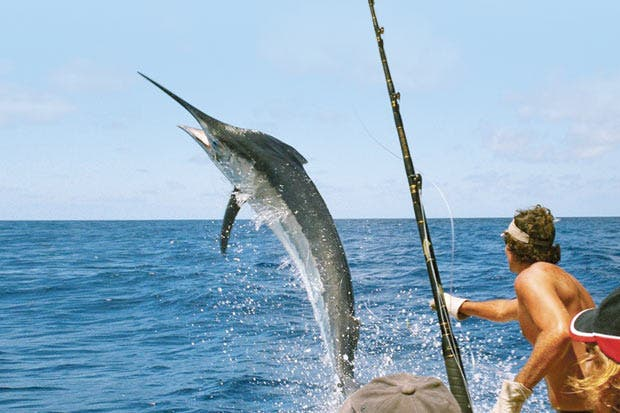Costa Rica aspira a ser la capital mundial de la pesca deportiva