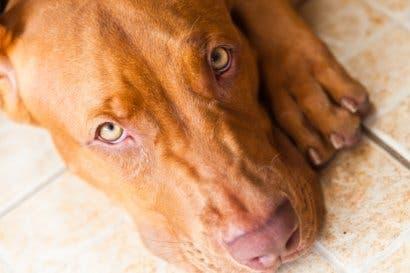 Mordeduras de perros causan al menos dos hospitalizaciones semanales
