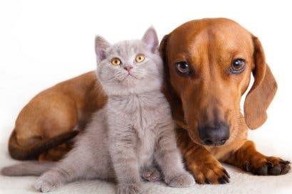 ¿Tiene mascotas? Conozca algunos consejos para mantenerles una nutrición adecuada