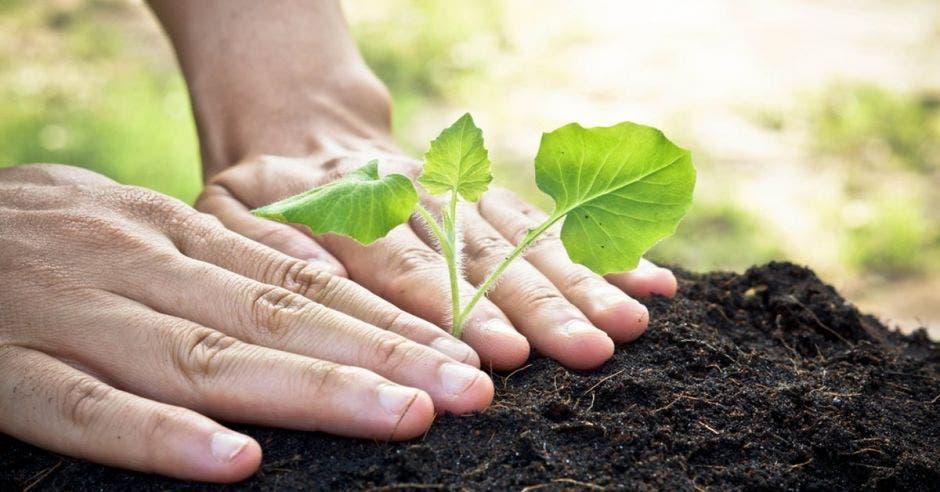 Festival lo invita a sembrar más de 5 mil árboles