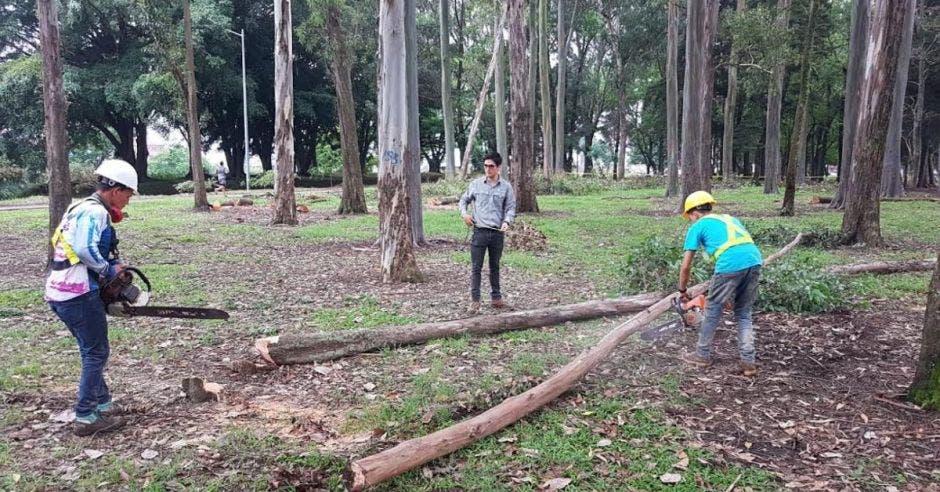 La Sabana se encuentra en proceso de sustitución de 300 árboles