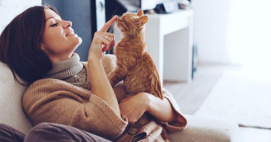 Campaña promueve adopción de gatos durante el Mundial