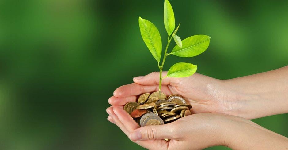 Banco Popular ha colocado más de ¢8 mil millones en proyectos verdes