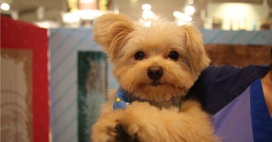 Festival para perros se disfrutará el domingo en Belén