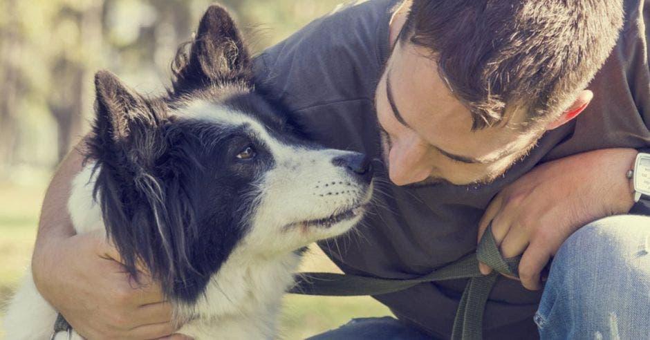 "Ulacit será ""dog friendly"""