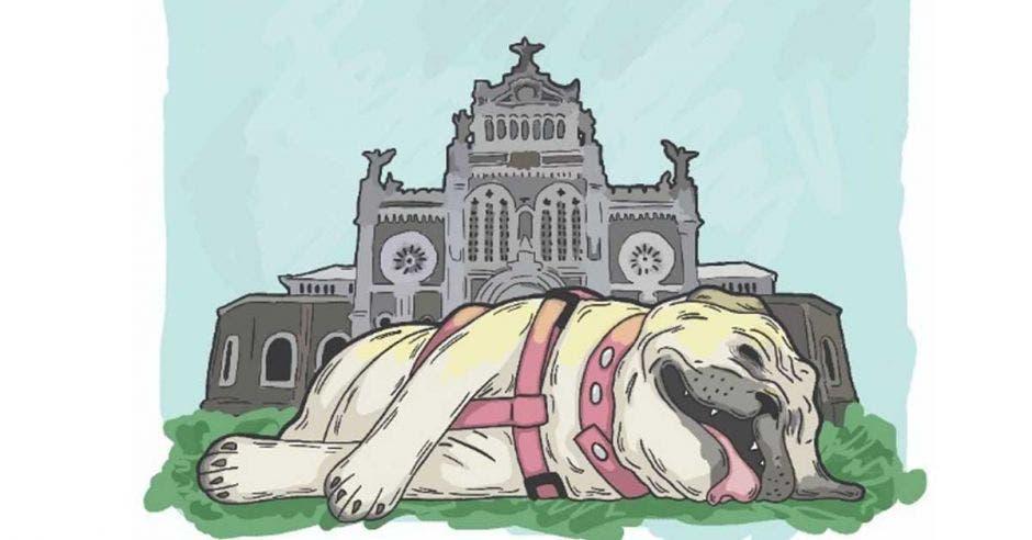 Autoridades insisten en que perros no deben participar de la romería