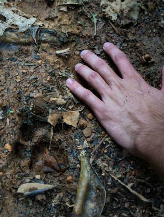 Huellas de Jaguar en Cerro Tigre